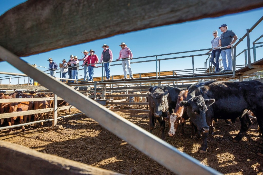 Roma Saleyards