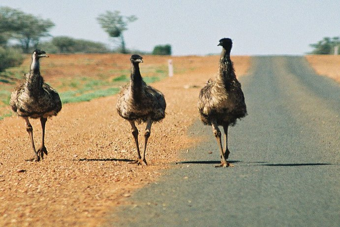 Outback Queensland | 6 wildlife to spot in Outback Queensland