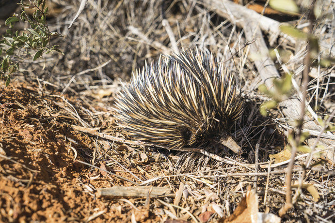 Charleville | 6 wildlife to spot in Outback Queensland