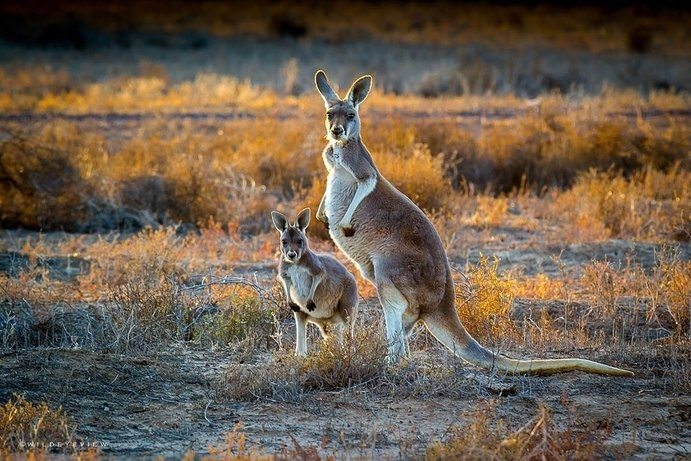 Kangaroos | 17 must get Instagram shots of Outback Queensland
