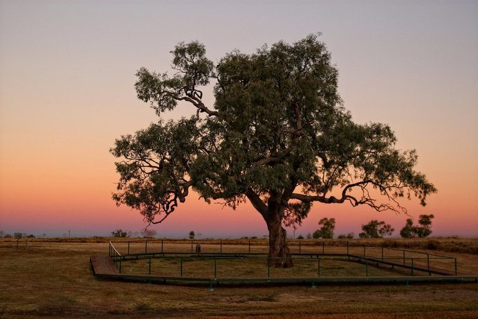 Historical Coolabah Tree | 13 things you didn't know about Hughenden