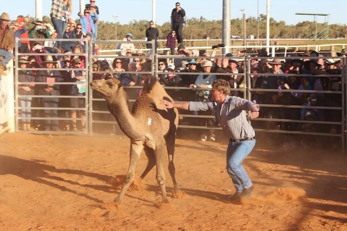 Camel Tagging | 6 reasons you need to put the Boulia Camel Races on your bucket list