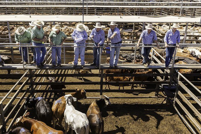 Roma Saleyards | 11 things to do in Roma