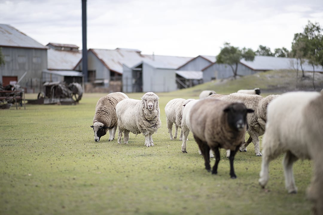 Blackall Woolscour | 10 things you didn't know about Blackall